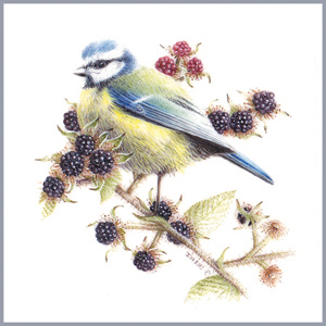 Bluetit on Bramble